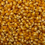 additional image for Popcorn Kernels - 50lbs